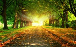 парк, дорожка, аллея, осень, листва, деревья, солнце, свет, луч солнца