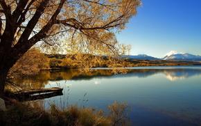 ponte, autunno, fiume, alberi