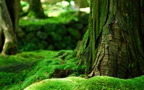 дерево, кора, лес, мох, зелень, лето
