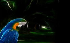 pappagallo, grafica, Photoshop