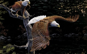 Art, picture, Eagles