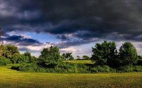 Los rboles, campo, cielo