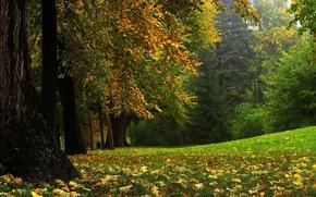 лес, деревья, осень