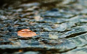 Вода, лист, осень, настроение