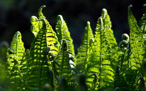fern, light, nature