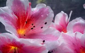 fiori, impianto, Macro