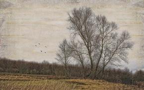 alberi, campo, sfondo, stile