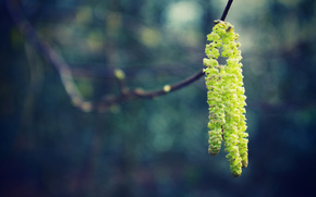 macro, spring, Earrings, color, branch, rozmytost