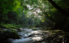 Nature, rivire, ruisseau, fort, Maples, lumire, rayons, soleil, frais