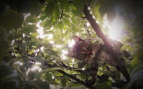 gatto, albero, fogliame, luce