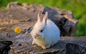 кролик, пень, малыш