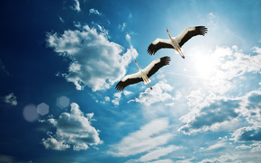 起重机, 天空, 云, 鸟类, 夫妇, 飞行, 翅膀