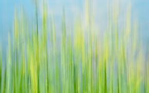 macro, grass, rozmytost