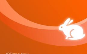 arancione, coniglio, minimalismo