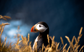 bird, Atlantic deadlock, blurring
