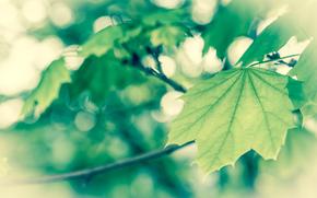 macro, spring, foliage, Green, vanilka
