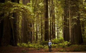 man, forest, Trees, nature