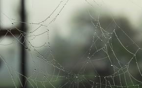 Telaraa, web, roco, gotas, Macro, agujero, Agujeros, porvata