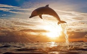 mare, acqua, spray, delfino, saltare, orizzonte, cielo, sera, tramonto