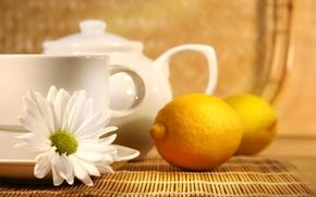 tea, chamomile, lemon, cup, kettle
