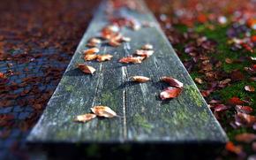 листья, скамья, макро