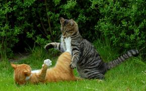 gatti, gatti, Kung Fu gatto