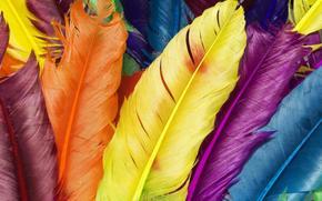 перья, разноцветные перышки, птицы