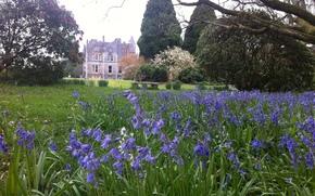 giardino, prato, fiori, castello