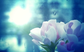 macro, geranium, rain, window