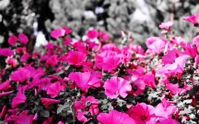 цветы, макро, клумба