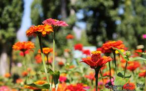 цветы, лето, зелень, макро