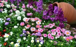 vase, Fleurs, Camomille, Nature