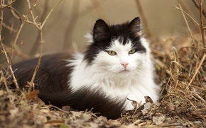 cat, wool, mordashka