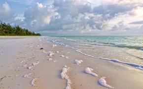 nature, sea, coast, sand, foam, surf, greens, clouds