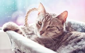 gatto, vista, cestino