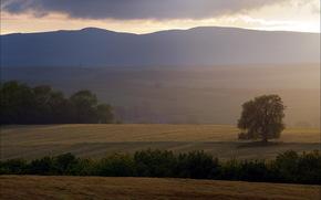 field, tree, sunset, landscape