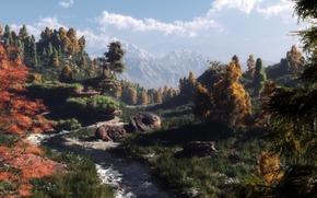 Arte, natura, foresta, alberi, traccia, pietre, Montagne