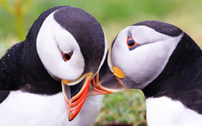 Birds, Atlantic deadlock