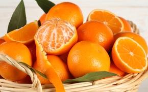 апельсины, цитрусы, фрукты, кожура, корзина