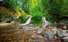foresta, torrente, acqua, pietre, verdura