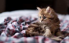 kitten, cat, cat, view, muzzle, focus