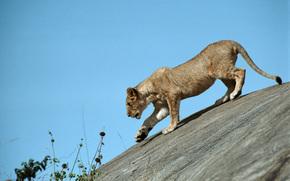 leonessa, cielo, grazia