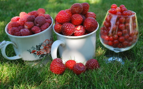 Berries, raspberry, currant, red, strawberry, dacha, Circles, cup, goblet, grass, macro