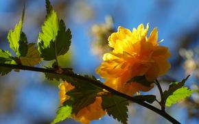 fleur, branche, arbre, jaune, feuillage, Ptales, printemps
