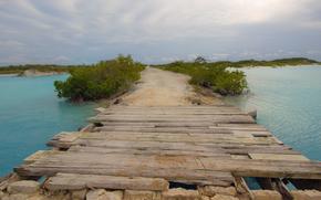 natura, ponte, fiume, acqua, traccia, verdura, legname, bordo, cespuglio