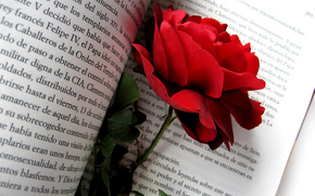 Red Rose, rose, red, Flowers, flower, bud, Petals, briar, nature, book, text