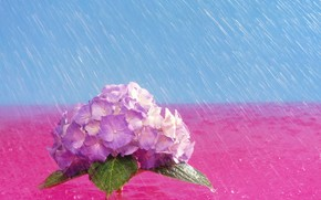 lluvia, Flores, brillante