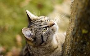 Koshak, gatto, gatto, Carta da parati