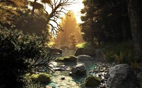 艺术, 性质, 森林, 树, 溪, 河, 潆, 石头, 日落