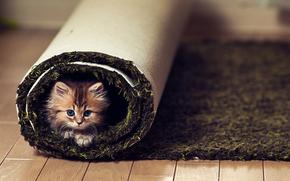 kitten, carpet, floor, view